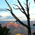 Grand Canyon Tree by Toby McGuire