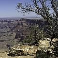 Grand Canyon View by Peter Lloyd