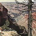 Grand Canyon View Weathered Tree Right Side  by Don  Langeneckert