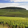 Grand Cru And Premier Cru Vineyards Of Aloxe Corton. Cote De Beaune. Burgundy. France. Europe. by Bernard Jaubert
