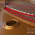 Grand Piano by Ann Horn