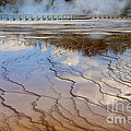 Grand Prismatic Runoff - Yellowstone by Sandra Bronstein