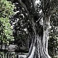 Grand Seville Tree by Lorraine Devon Wilke