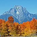 Grand Teton National Park 2 by Jacklyn Duryea Fraizer