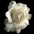Grandeur Ivory Rose Flower by Jennie Marie Schell