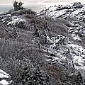 Grandfather Mountain's Linville Peak  by Carol Montoya