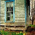 Grandma's Daffodyls by Julie Dant