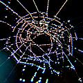 Grandmother Spider's Dream Catcher by Paula OMalley