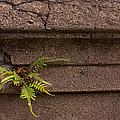Granite Fern   #5708 by J L Woody Wooden