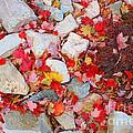 Granite Rocks Among Maple Leaves by Kenny Bosak