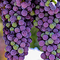 Grape Bunches Portrait by Michael Moriarty