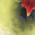 Grape Leaf Water Drop by Kume Bryant