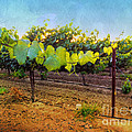 Grape Vine In The Vineyard by Shari Warren
