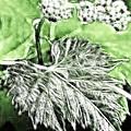 Grape Vine Leaf by Odon Czintos