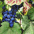 Grapes 3 by Jacklyn Duryea Fraizer