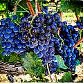 Grapes Of Art 1 by Roxy Hurtubise
