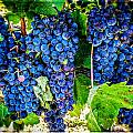 Grapes Of Art 3 by Roxy Hurtubise