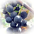 Grapes On The Vine by Kathleen Struckle