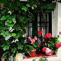Grapevines And Geraniums Around A Window by Elaine Plesser