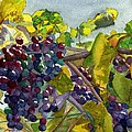 Grapevines by Lynne Reichhart