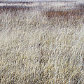 Grass Abstract by Ivan Slosar