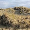 Grass And Sand Dunes by Athena Mckinzie