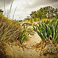 Grass And Sand Of Elafonisi by Oleg Koryagin