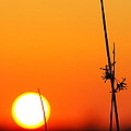 Grass At Sunset 2am-13695 by Andrew McInnes