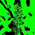 Grass Bloom Variations 6 by John Le Brasseur