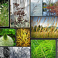 Grass Collage Variety by Tikvah's Hope