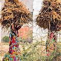 Grass Cuttings by Gaurav Singh