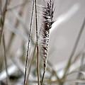 Grass by Gerald Greenwood