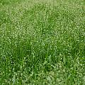 Grass by Gina Dsgn