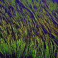 Grass In The Lake by Tom Janca