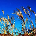 Grass In The Wind by Vicki Dreher