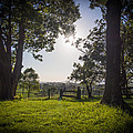 Grass Is Greener by Kaleidoscopik Photography