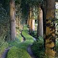 Grass Lane by Ronald Jansen
