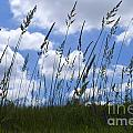 Grass Meets Sky by Bill Thomson