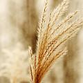 Grass by Roman Aj