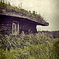 Grass Roof On Cottage by Jill Battaglia