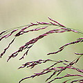 Grass Seed by Leeon Photo