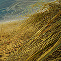 Grass To Sea by Hal Halli