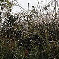 Grasses Glittering With Thousand Of Raindrops by Ulrich Kunst And Bettina Scheidulin
