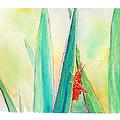 Grasshopper by C Sitton