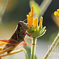 Grasshopper Delight by Kenny Glotfelty