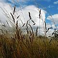 Grassland by Loreta Mickiene