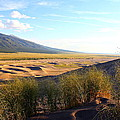 Grassy Dune by Marcelo Albuquerque