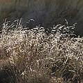 Grassy Knoll by Lew Davis