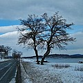 Grassy Point Winter by Thomas  McGuire