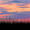 Grassy Sunset by Ron  Tackett
